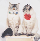 Couple de chats